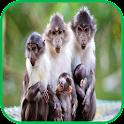 Monkey Wallpaper icon