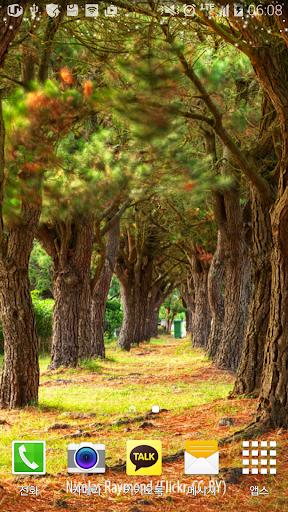 연인들을위한숲속길배경