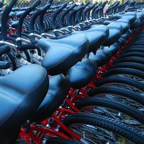 Bikes, Bikes, Bikes by Kathy Rose Willis - Transportation Bicycles ( red, rentals, bikes, tires, seats, black,  )