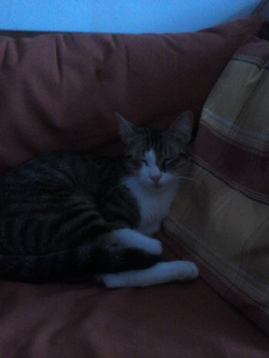Misfit the Cat