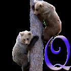 Rons Smoky Mountains Quiz icon