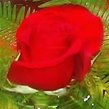 Download Valentine Day Poems free
