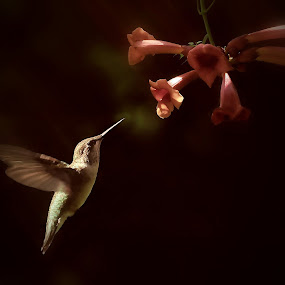 Breakfast in the Garden by Liz Crono - Animals Birds ( flight, flowers, light, birds, hummingbirds )