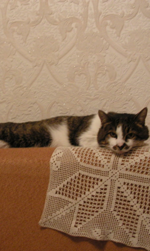 Couch Cat Live Wallpaper