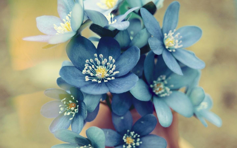 Hd wallpaper beautiful - Beautiful Flowers Wallpaper Hd Screenshot