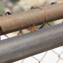 uncertain wasp