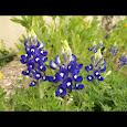 Fort Worth Flora