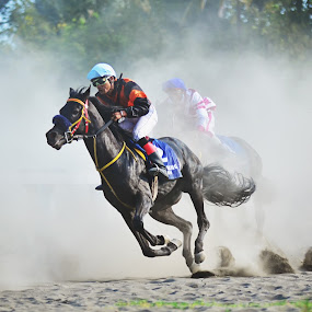 the winner by Jiboy Mandey - Animals Horses ( ride, sigma, horse, jiboy, nikon, animal )