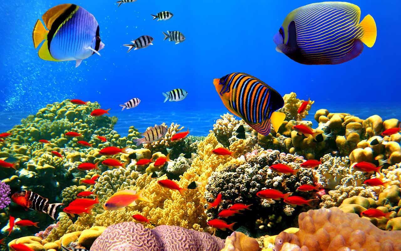 Wallpaper 3d Ikan Kampoeng Wallpaper