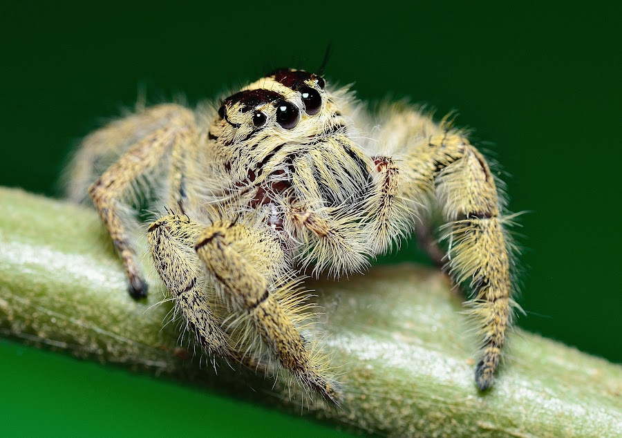 by Mohd Adli - Animals Insects & Spiders
