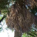 Dead Palm Tree
