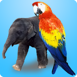 Baby Puzzle for PC and MAC