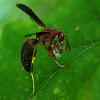 Paper wasp with prey