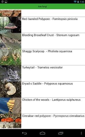 Tree Identification Screenshot