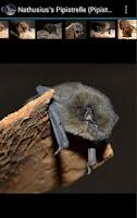 Screenshot of BatLib - Bat calls
