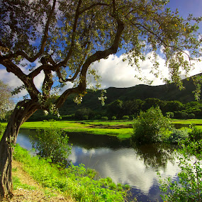 Hamakua Marsh, Kailua by Timothy Carney - Landscapes Prairies, Meadows & Fields ( marsh, kailua, hamakua, hawaii )
