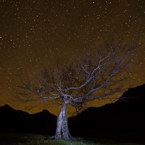 Buna seara Medved by Adrian Urbanek - Landscapes Starscapes