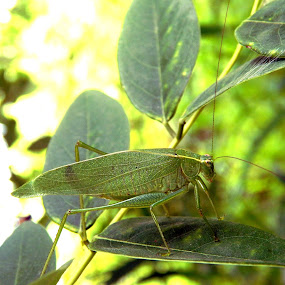Grasshopper by Mukesh Mishra - Novices Only Macro ( grasshopper macro real photography surat )