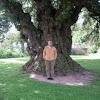 Encina. Holm Oak