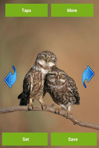 Owls Wallpapers - screenshot