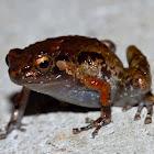 Dull Frog