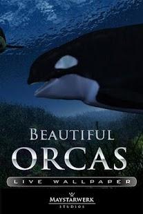 逆戟鯨鯨生活壁紙