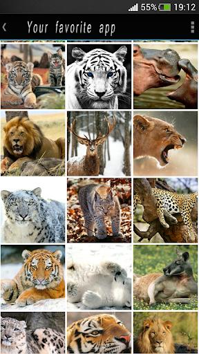 野生动物高清壁纸