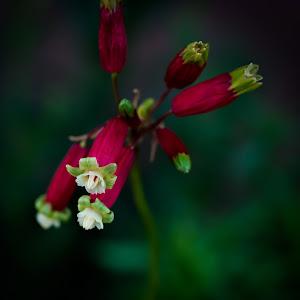 small red flower.jpg