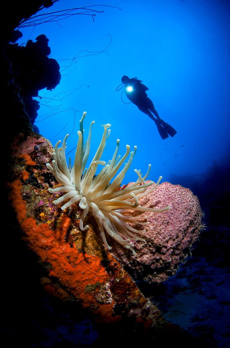 Curacao's coral reefs are a diver's wonderland: Its 65 diving sites are among the most popular in the Caribbean