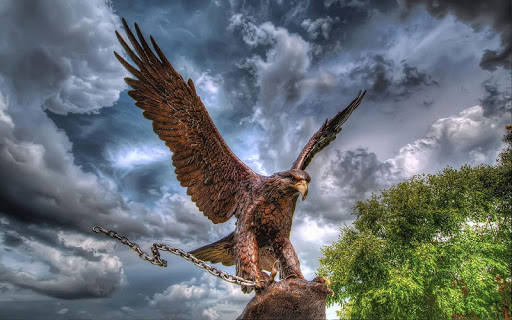 Eagle HD Wallpaper