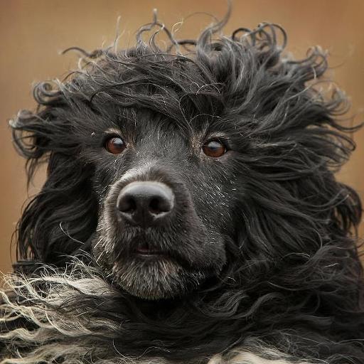 葡萄牙水犬 個人化 App LOGO-硬是要APP