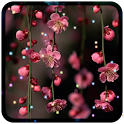 Flowers Livewallpaper icon
