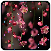 Flowers Livewallpaper