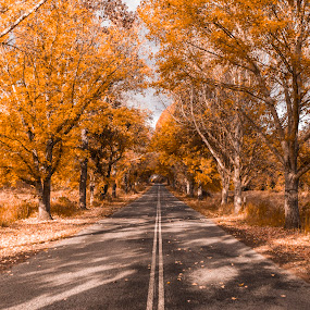 The Road to Winter by Cameron Watts - Uncategorized All Uncategorized ( colour, winter, autumn, fall, trees, road, landscape, leaves, roads, color, colorful, nature )
