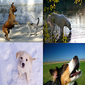 Dog Sound Effects icon