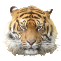 Tiger Head Sticker icon