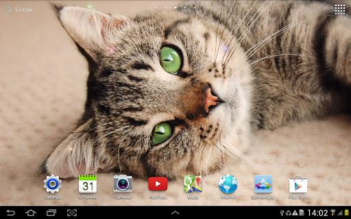 Cat Live Wallpaper 1.0.8 screenshots 9