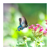 3D love of butterfly wallpaper