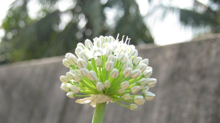 by Brishti Sarkar - Flowers Flower Buds