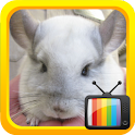 Kids TV Mouse logo