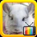 Kids TV Mouse logo
