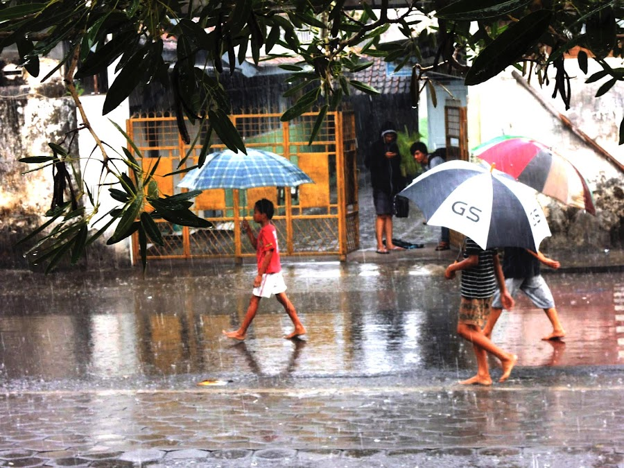 Tropical rain by Bogdan Penkovsky - City,  Street & Park  Street Scenes ( umbrellas, tropical, street, children, kids, rain )