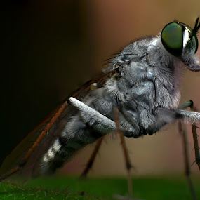 Macro flies by Anand Lepcha - Animals Insects & Spiders ( reversalring, macro, br2a, nikon, flies,  )