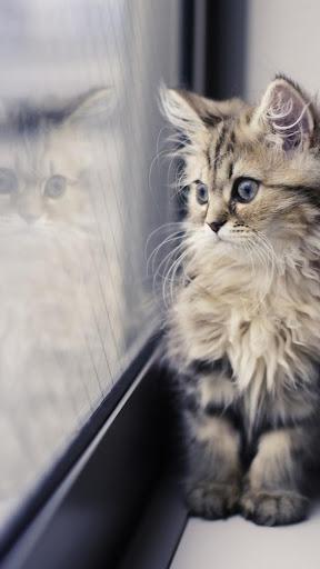 Cute Cat Refresher Wallpaper