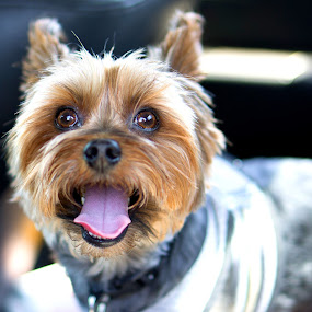 happy by Christopher Wu - Animals - Dogs Portraits (  )