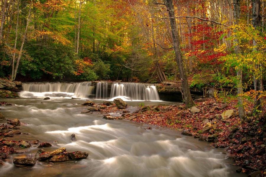 by Cheryl Hudnall Kincaid - Nature Up Close Water (  )