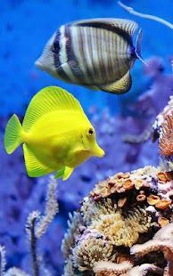 Aquarium Živé Tapety - náhled