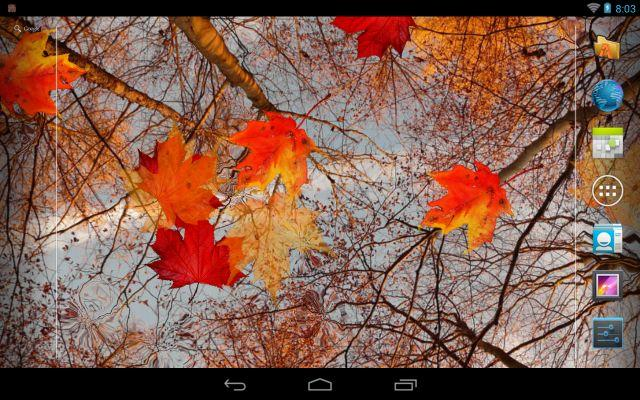 Autumn Maple Live Wallpaper - screenshot