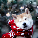 Akita Inu Dog Wallpapers logo