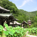 Mimurotoji Temple(JP062) icon